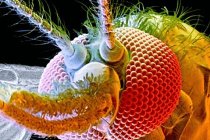 Matlab contra o zika vírus
